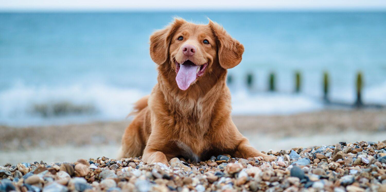 Meet the doggy residents of Felixstowe!